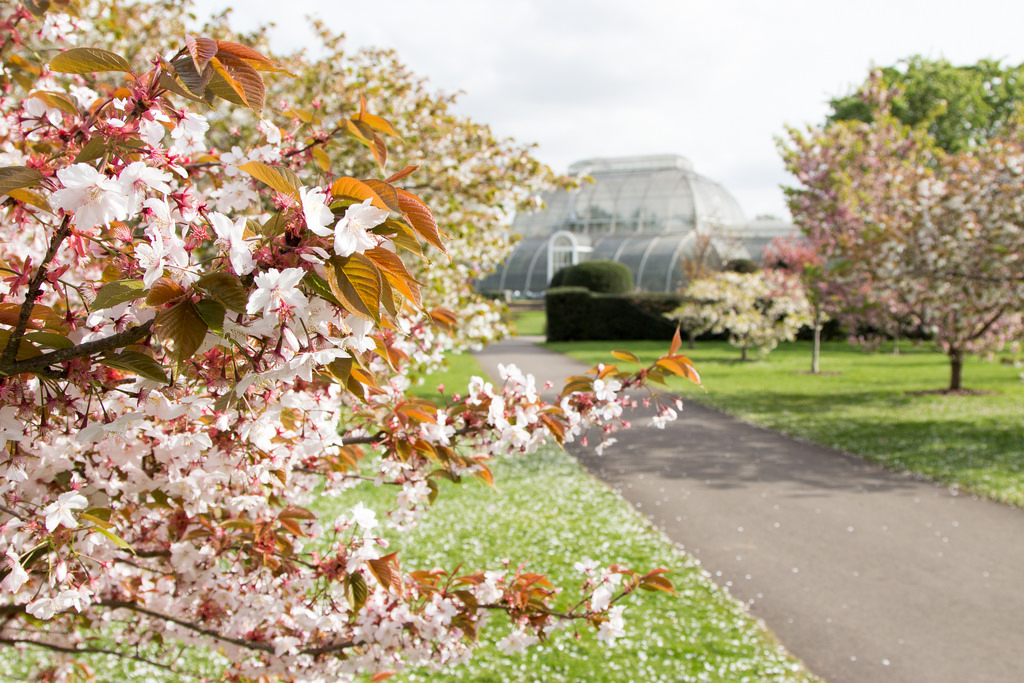 kew gardens essay If you're writing a kew gardens essay and need some advice, post your virginia woolf essay question on our facebook page where fellow bookworms are always glad to help.